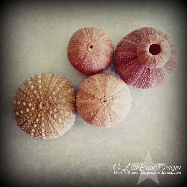 Sea Urchin Collection