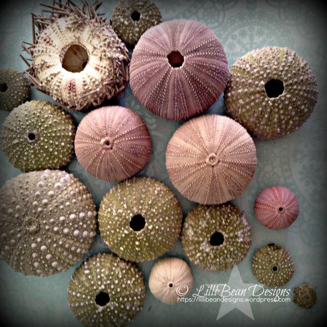 Sea Urchin v